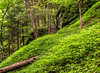 Stairway in the Woods (LJS74) Tags: trees forest landscape log woods upstatenewyork newyorkstate ithaca fingerlakes enfield naturetrail tremanstatepark undergrowth stonestairway stonestaircase