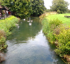 The little river outside of the Fromebridge Mill pub-restaurant (southglosguytwo) Tags: 2014 fromebridgemill gloucestershire pub river swans trees variouspeople water cameraphonephoto