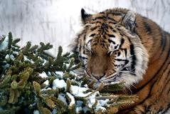 2014-01-29 Snow Aria (137)