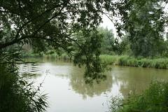 DSC06479 (Ton Smilde) Tags: oostvaardersplassen naturereserveinthenetherlands