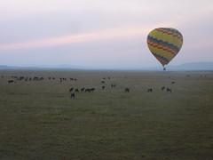 Balloon Ride - Masai Mara (August 2013) (irlLordy) Tags: trip holiday honeymoon ride kenya balloon august safari wildebeest masaimara 2013