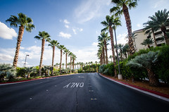 Palm trees line the road to the JW Marriott Las Vegas