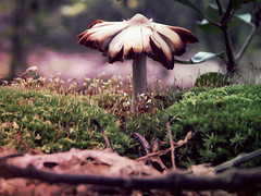 (g ) Tags: mountains green nature mushrooms photography moss woods fungi fungus