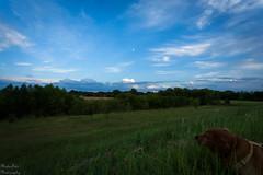 Cool sky today (Kay Martinez) Tags: cloud dog moon green field grass goldenretriever bluesky kansas stormcloud grassyfield