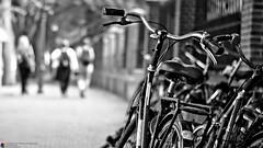 CityWalk The Hague #n of n (Jan Bierens) Tags: summer urban blackandwhite monochrome 50mm streetphotography streetlife denhaag thehague straat primelens straatfotografie streetphotographyblackandwhite d5100 microseries