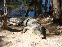 Mossman Gorge & Croc Farm 037 (mart.panzer) Tags: pictures vacation people holiday beach nature nationalpark bestof photos top awesome australia highlights best queensland impressions australien greatbarrierreef mossmangorge viewfromtheair mustsee bestoff martinpanzer gerhardpanzer