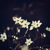 ~ Where Shadow Chases Light ~ (Flick Vlooi) Tags: flowers light shadow nature floral contrast dark square poetry poem bright toned rabindranathtagore vanagram
