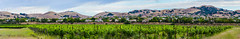 ruby hill panorama (pbo31) Tags: california summer panorama color green june community nikon wine farm over large panoramic vineyards eastbay gated livermore stitched pleasanton alamedacounty d800 2015 boury pbo31 rubyhills