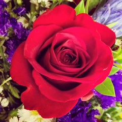 "A simple rose says ""I love you for so many reasons"" #love #rose #marriage (aimeegonz1123) Tags: love rose marriage"