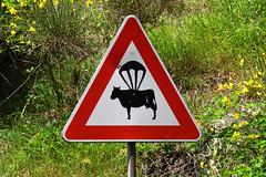 Para-cow (Alfredo Liverani) Tags: street italien italy streetart art wall canon graffiti italia spray tuscany toscana toscane murales italie toskana g12 casaglia borgosanlorenzo canong12 aerosolcolor