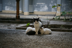 lunch time... (ericguéret) Tags: chatte cats chats maroc tanger