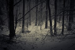 Dark Winter (Netsrak (on/off)) Tags: atmosphäre baum bäume eifel februar forst landschaft natur nebel schnebel schnee stimmung wald atmosphere fog forest landscape mist mood nature snow tree trees woods meckenheim nordrheinwestfalen deutschland de winter