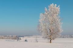 frozen world (Sergey S Ponomarev) Tags: sergeyponomarev canon eos 70d landscape paysage paesaggio nature natura winter inverno perspective cold frost сергейпономврев природа пейзаж россия мороз холод европа киров вятка kirov vyatka russia europe