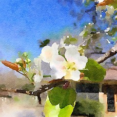 Hints of spring. #spring #blossom #waterlogue #waterlogueapp (peppermcc) Tags: spring blossom waterlogue waterlogueapp