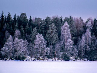Frosty Lakeside Forest