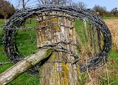 HFF met prikgevaar/ HFF prick dangerous (truus1949) Tags: hff prikkeldraad wandelen weilanden lente landschap limburg