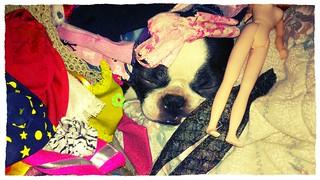 Pile o' dolly dog