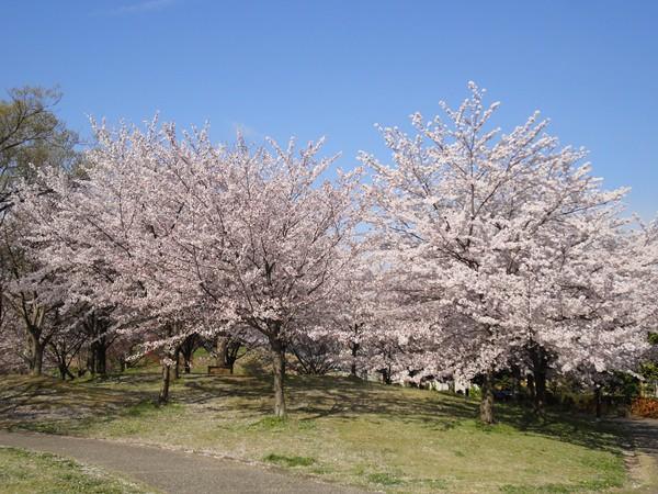 タケノコ堀の後は広場へ。|大高緑地