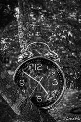 Clock&Tree (limebluphotography) Tags: barcelona china california birthday christmas city family flowers blue autumn england blackandwhite bw food dog baby chicago canada black flower color berlin bird art fall film beach church face car fashion birds animals bike festival architecture clouds cat canon naked de dance football concert bush hands asia europe day florida band australia tick tock tre