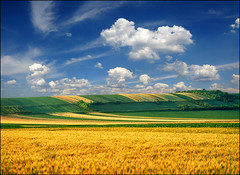 Sunny spring (Katarina 2353) Tags: travel sky cloud plant fall film nature field grass analog landscape photography photo spring nikon peace place image outdoor hill serbia x valley serene agriculture ova vojvodina srbija katarina2353 krcedin serbiainspired