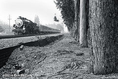 Steaming along the trees (samreevesphoto) Tags: california burlingame southernpacific