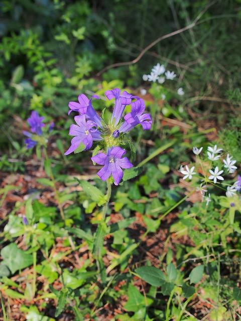 旅館邊的野花