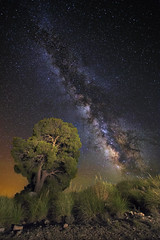 Magical tree (Perez Alonso Photography) Tags: light tree night painting star landscapes nightscape galaxy estrellas astronomy universe astronomia galaxia milkyway universo canon1740 canon6d valactea