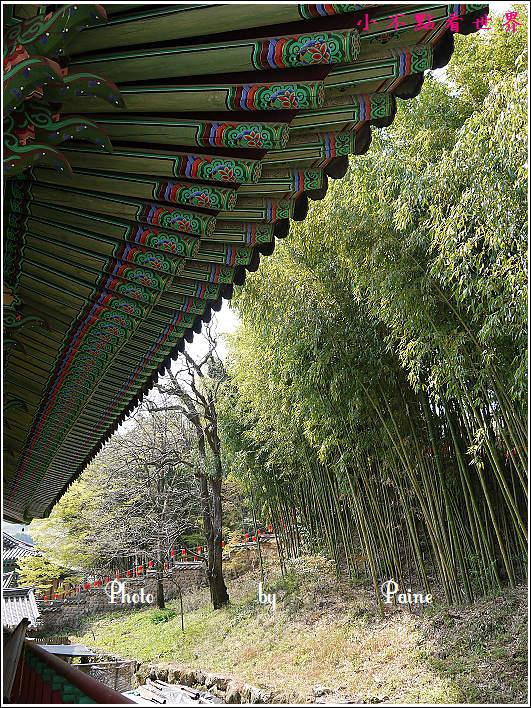 釜山梵魚寺 (53).JPG