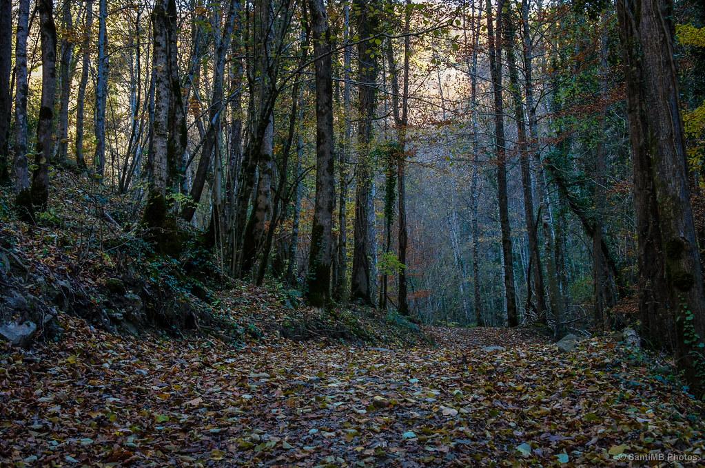 El aliento del bosque