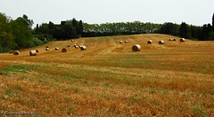 Toscana (Giovanni Meniconi) Tags: italy panorama colors canon landscape eos italia country hills pisa campagna tuscany toscana colori paesaggio giovanni collina fieno agricoltura santaluce meniconi eos60d giovannimeniconi lauralorenzana