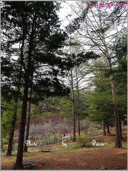 晨靜樹木公園