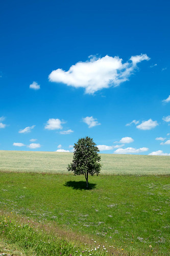 einsam aber fröhlich / lonely but happy