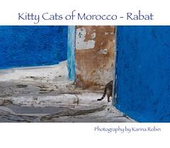 image (karina robin travel photography) Tags: charity cats robin animals tiere chats morocco maroc katze animaux ebook marokko karina streetcats