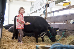 Kent_County_Show_2014_006