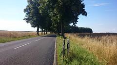 2014.07.13 - Mittenwalde - Bike Road Ride (Dexte-r) Tags: road trees summer sun berlin bike bicycle trek germany brandenburg madone 2013 mittenwalde sonyexperiax1compact