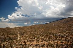 Saguaro_4627 (Omar Omar) Tags: arizona cactus usa hot southwest cacti amrica desert tucson dry az heat saguaronationalpark sonorandesert calor saguaros usofa desertsouthwest chaude celaje