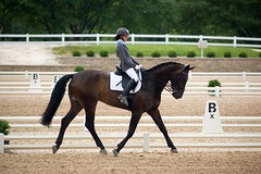 Dressage Dreams: Impressions from a Sunday at Lamplight (Tackshots) Tags: horse wayne lamplight equestrian dressage dressagehorse