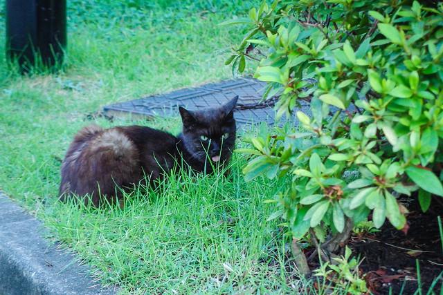 Today's Cat@2014-08-15