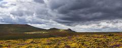 Saddle Tor (yadrad) Tags: heather devon tor dartmoor gorse saddletor haytorrocks dartmoornationpark