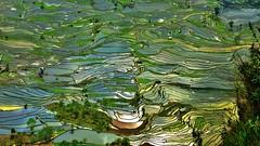 Landscape mosaic (flowerikka) Tags: china cn germany landscape worldheritagesite yunnan hani riceterraces yuanyang chineseminority daarklands