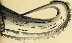 Anglų lietuvių žodynas. Žodis genus macrozamia reiškia genties macrozamia lietuviškai.