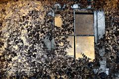 Forgotten (adrienneleaphoto) Tags: window ivy northcarolina oldhouse cameron abaondoned cameronnc paintedbarnsofcameron