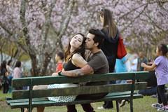 Love! (Nay Venancio) Tags: flower love boyfriend cherry 50mm blossom t3i 50mm18 cerejeira 600d