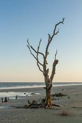 Botany Bay's Ghost Oaks (Luke Robinson) Tags: family usa beach landscape unitedstates southcarolina charleston marsh botanybay edisto edistoisland 2014