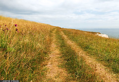 20130808_07 Grassy trail by the White Cliffs of Dover, England (ratexla) Tags: ocean uk greatbritain travel sea summer vacation england favorite holiday travelling nature beautiful grass landscape coast cool scenery europe hiking earth path scenic trail backpacking journey shore traveling grassland epic interrail dover stig semester englishchannel vandring interrailing thewhitecliffsofdover landskap tellus kust grs eurail cliffsofdover tgluff 2013 storbritannien theuk europaeuropean tgluffning tgluffa eurailing thecliffsofdover photophotospicturepicturesimageimagesfotofotonbildbilder canonpowershotsx40hs resaresor tgresatgresor 8aug2013 ratexlasinterrailtrip2013