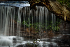 Natures Garden (benpearse) Tags: blue mountains rock photography ben australia august falls wentworth nsw weeping katoomba 2014 pearse