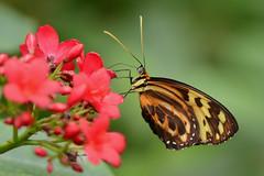 Colors (Rene Mensen) Tags: colors butterfly nikon emmen dierentuin vlindertuin d5100