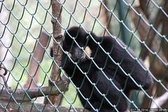Zoo Eberswalde (dorf-fotograf) Tags: museum zoo meerschweinchen tiere wolf tiger adler gans fisch ziege huhn pony leopard lemur albino lama bison tierpark vögel ente brandenburg pferd pinguin maka schwein reh esel ara tier vogel schlange kamel uhu hirsch bär affen bären löwe echse hahn affe leguan schildkröte krokodil pinguine rehe geier tauchen unterwasser eberswalde barnim eule streichelzoo weis fütterung aras löwin gehege papagai büffel polarwolf stachelschwein kautz hirsche flughund äffchen weiskopfseeadler wisente wiesente