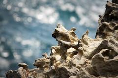 Una poesia nella roccia (Alessandra Leonetti) Tags: italia mare roccia salento puglia alessandraleonetti