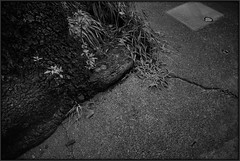 2014/09/07 08:16 Fujisawa (Masayo Nabeshima) Tags: material